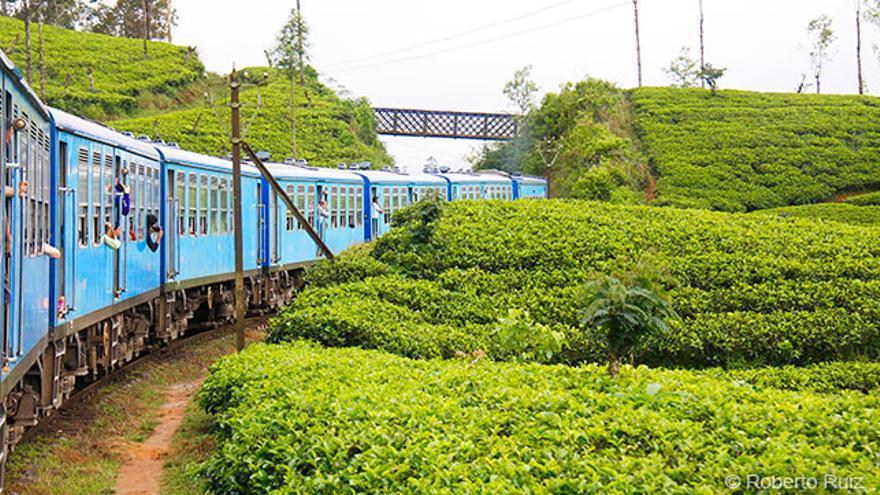 El que une las ciudades de Kandy, Nuwara Eliya y Ella atraviesa montañas cubiertas por plantaciones de té.