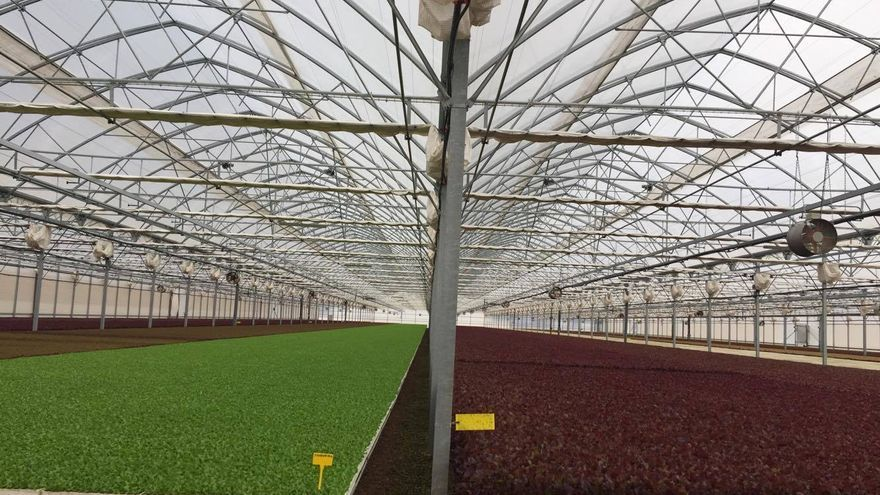 El invernadero produce 2.000 kilos semanales de diferentes productos vegetales