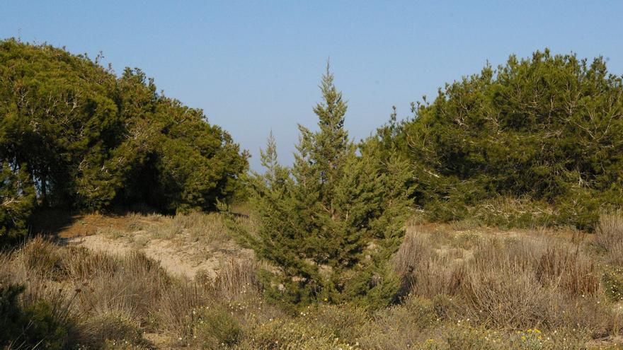 330 especies de flora esperan sus planes de Protección en Murcia