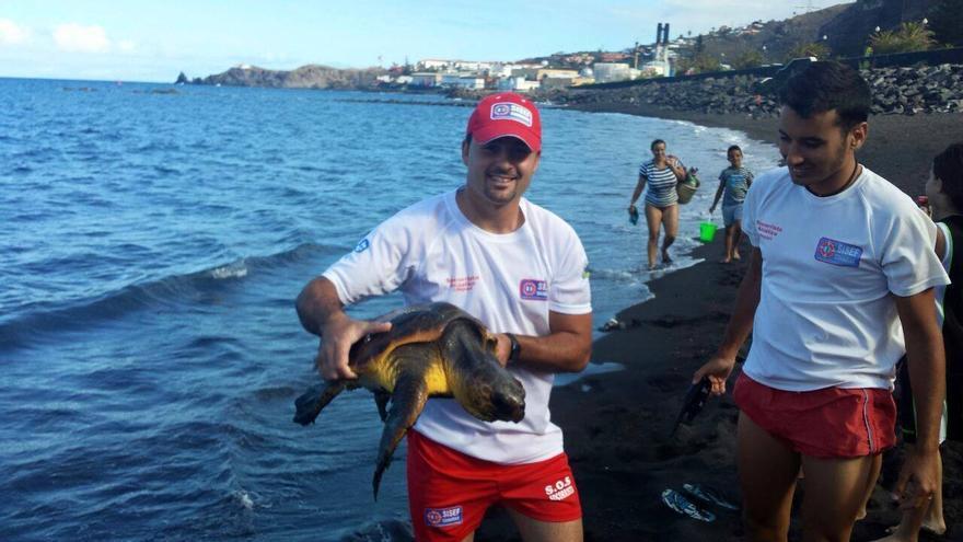 En la imagen, los vigilantes de la playa Bajamar con la tortura rescata este martes, 23 de junio. Foto: SISEF Canarias.
