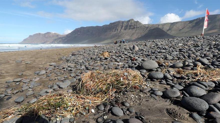 Imagen de los fragmentos de plástico que deposita la marea en la playa de Famara, en la costa norte de Lanzarote