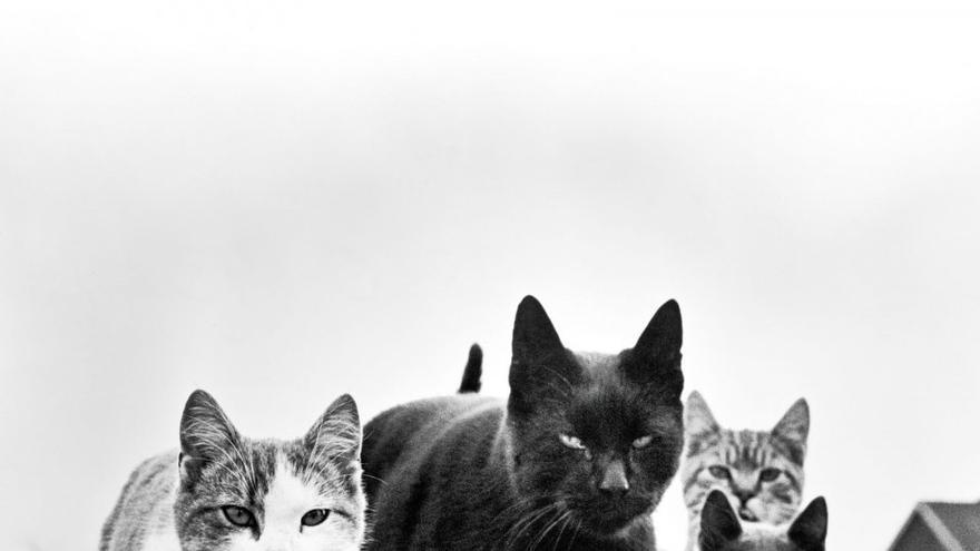 'The Mob', un grupo de felinos que se ha convertido en una de las obras más características del autor. Nueva Jersey, 1961