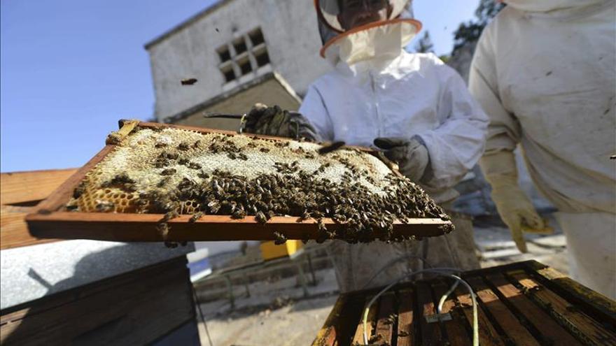 Las abejas de la miel provienen de Asia y no de África, según un estudio