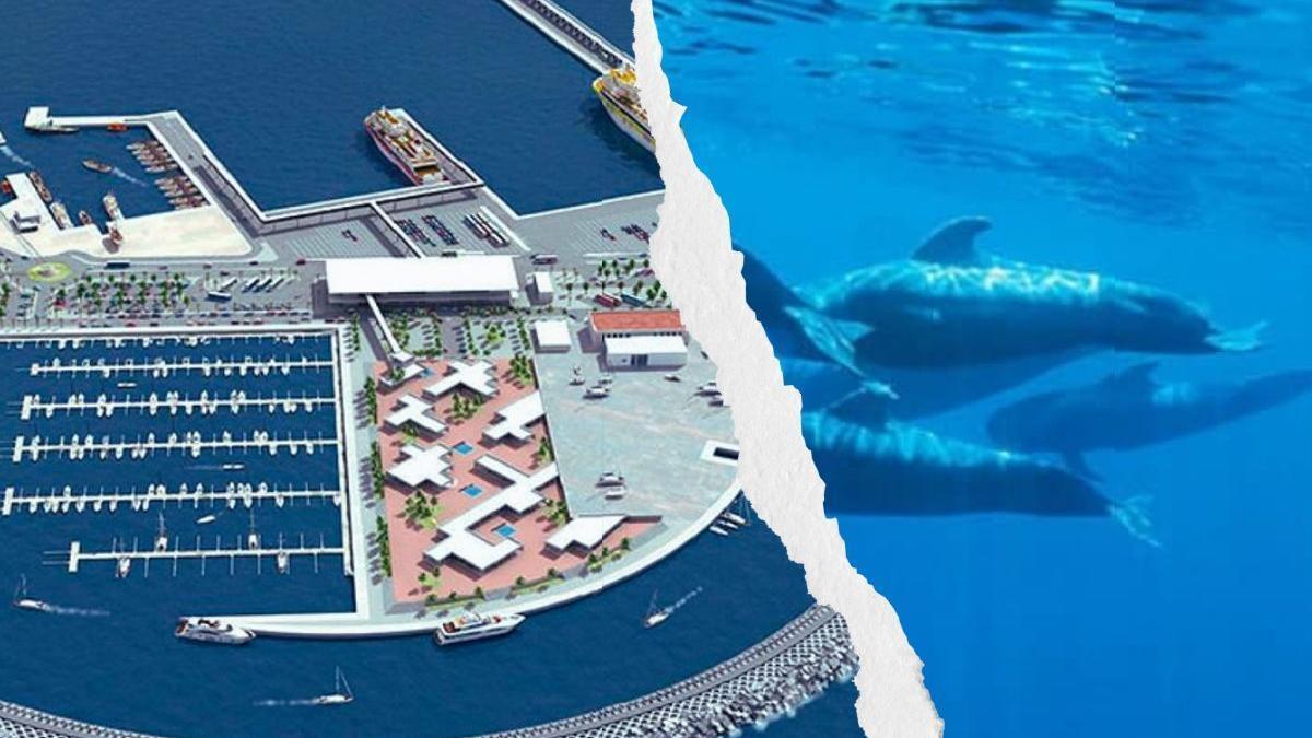 El puerto de Fonsalía pone en riesgo una Zona de Especial Conservación (ZEC) de la isla, habitat de cetáceos.