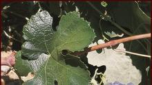 Las organizaciones agrarias valoran positivamente el Decreto del vino pero piden agilidad a las administraciones
