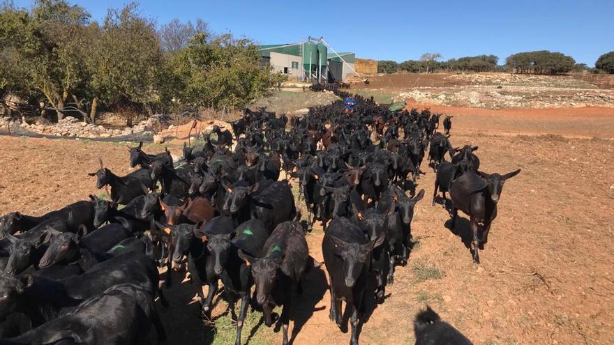 Los ganaderos continúan con su producción destinando buena parte de ella a ayudar a la sociedad