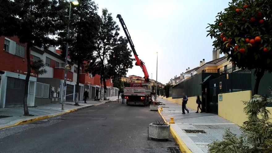 "Sevilla por el Clima tacha de ""atentado contra la naturaleza"" la tala de San Juan y estudia medidas legales"