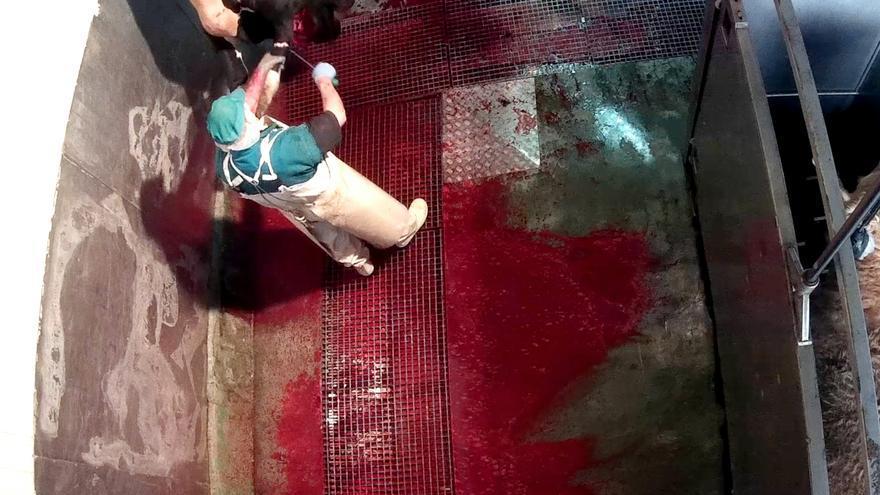 Imagen de un operario sobre una res en el matadero / Equalia.