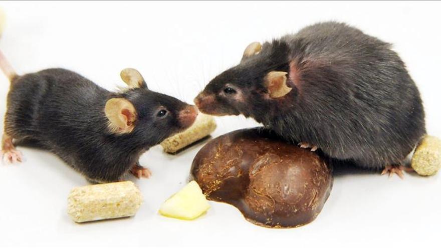 Prueban con éxito en ratones una molécula para tratar el alzhéimer