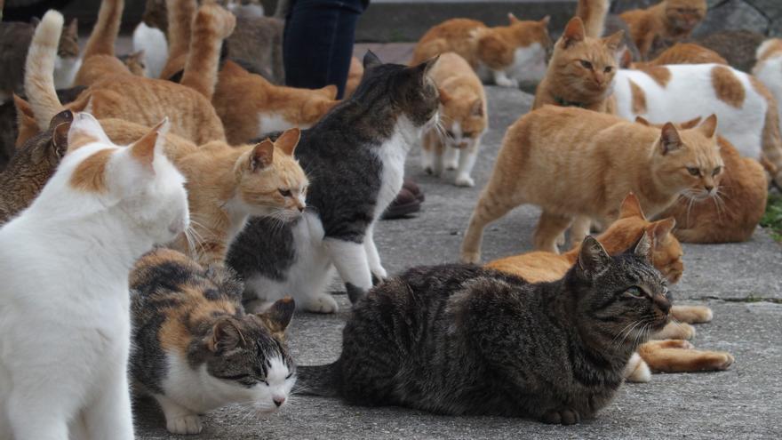 En la isla de Aoshima, en Japón, hay seis gatos por cada habitante.