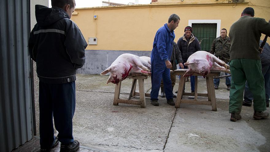 Un niño observa la matanza del cerdo en Toledo, sin aturdimiento. Foto: Tras los Muros