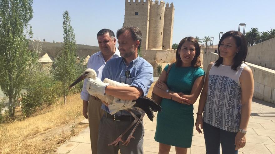 El consejero de Medio Ambiente libera una cigüeña blanca y cinco cernícalos en los Sotos de la Albolafia