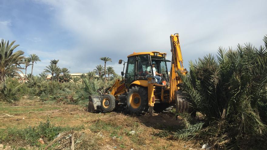 Las máquinas trabajan en arrancar las palmeras afectadas por el picudo, en los huertos ligados a la antigua Estación Fénix