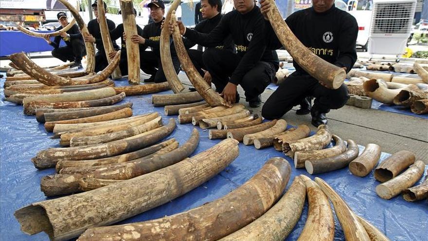 Científicos tailandeses investigan una aplicación para detectar marfil ilegal