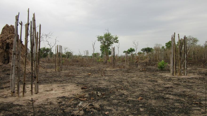 Repoblación en una zona quemada por un incendio forestal / Foto: José Naranjo