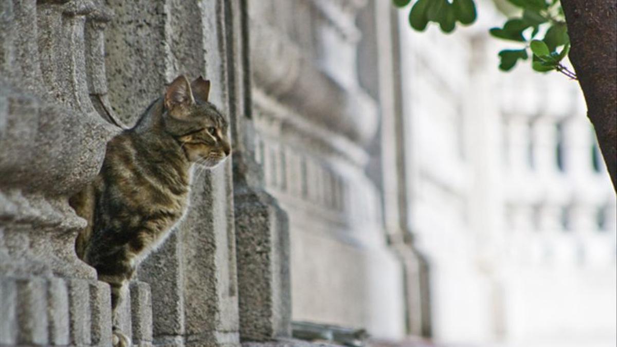 Gato de una colonia felina en un núcleo urbano.