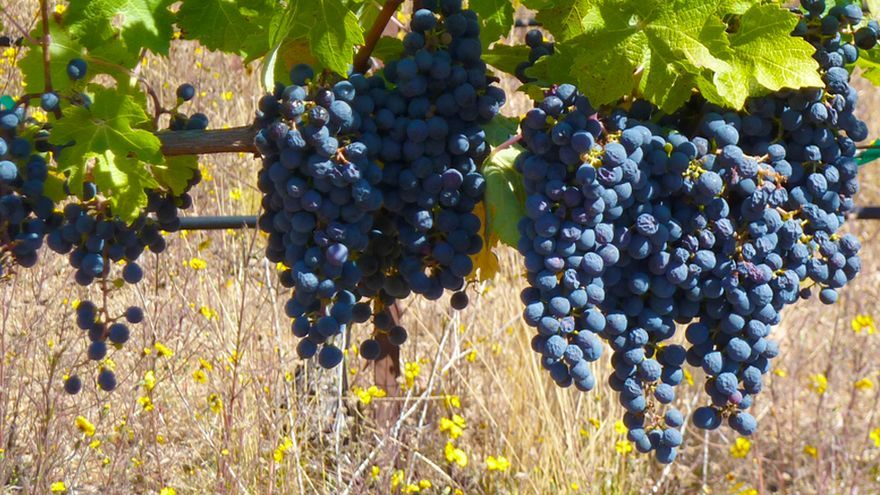 Vino de Castilla-La Mancha