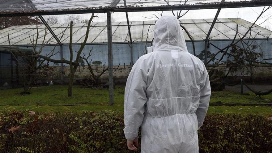 Francia sube a 'elevado' el riesgo de gripe aviar por las granjas infectadas