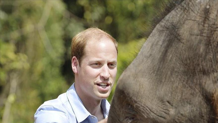 El príncipe Guillermo se despide de China con una visita a una reserva de elefantes