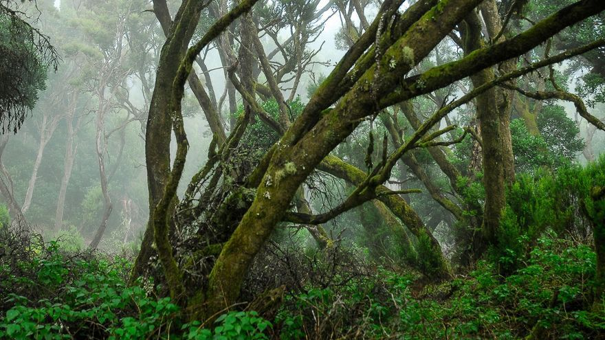 El Hierro cierra las pistas forestales por las altas temperaturas