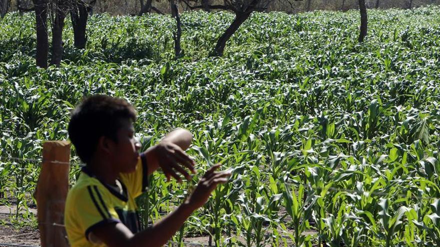 La demanda de alimentos crecerá a menor ritmo hasta 2025, según FAO y OCDE