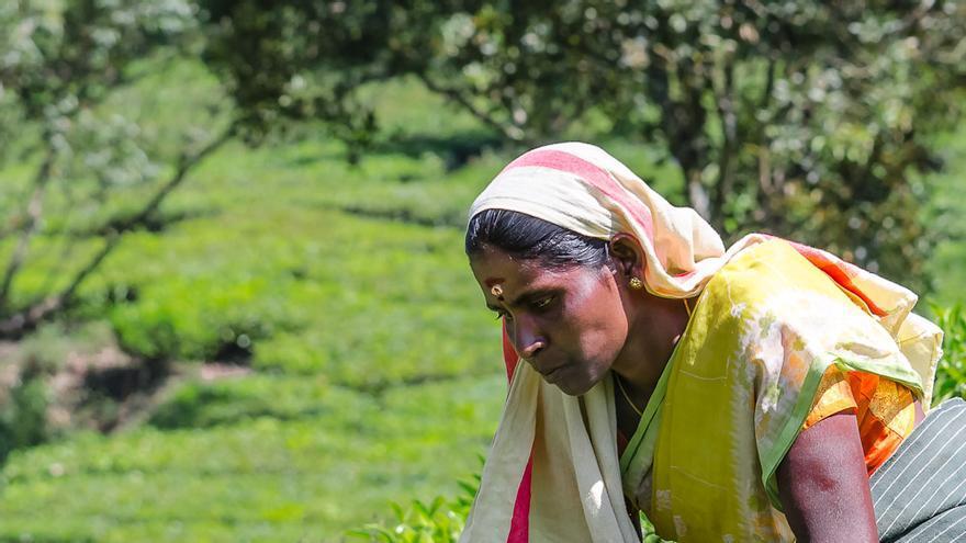 Recolectora de té en una de las plantaciones de Munnar. Stefano Ravalli (CC)