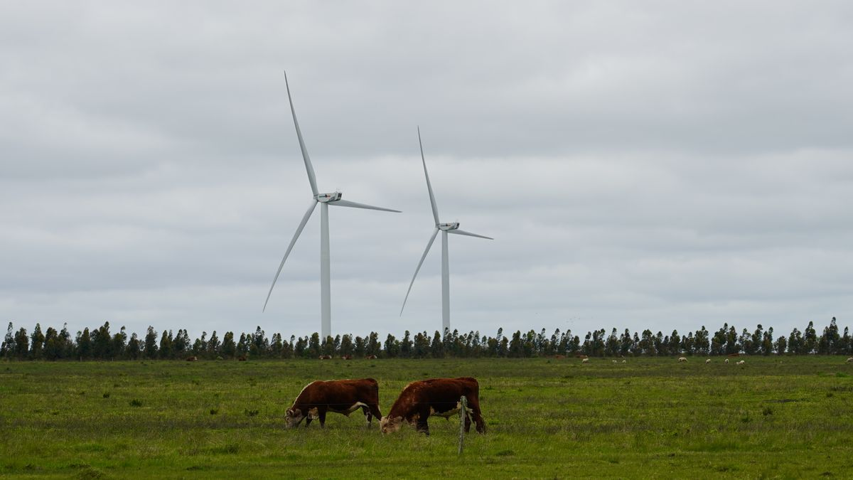 Pastoreo, captura de carbono y energías renovables en Uruguay