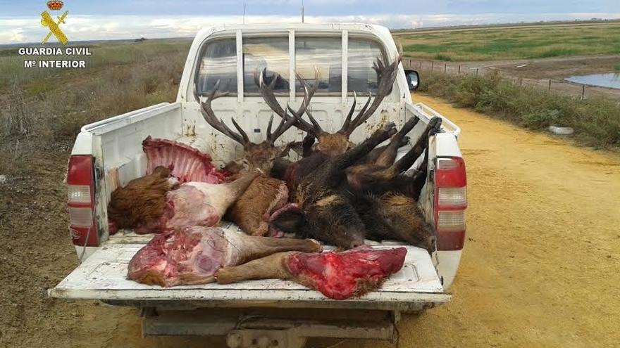 Interceptan un vehículo en el entorno de Doñana con piezas de caza furtiva
