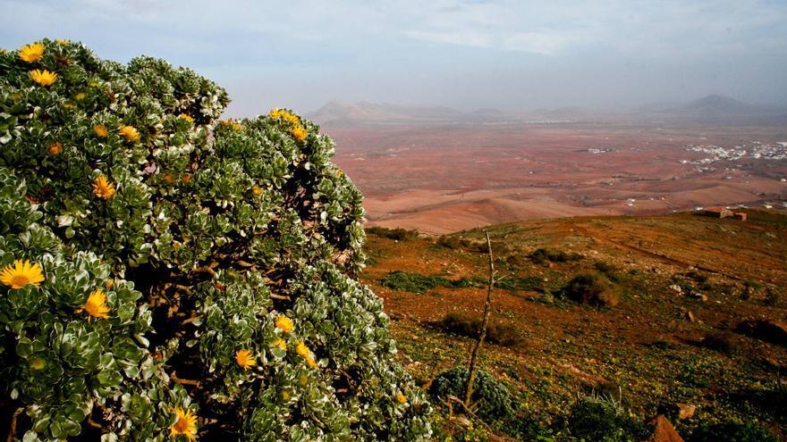 Páramos del interior de Fuerteventura, escenario de las apariciones de la Luz Mafasca. VIAJAR AHORA
