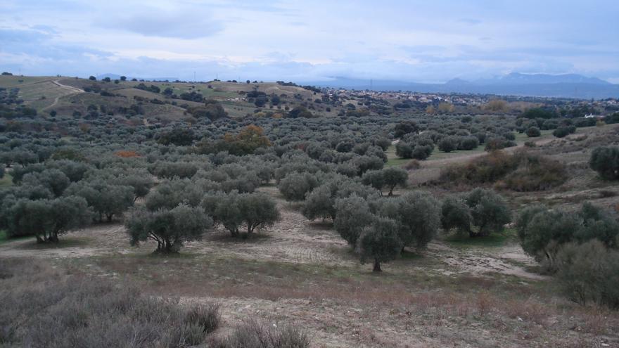 Vino con denominación de origen y olivos centenarios frente al desarrollo fotovoltaico: el dilema en un pueblo de Toledo