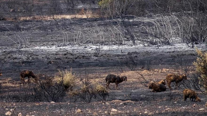 Extinguido el incendio La Granada (Huelva) que afectó a 3.852 hectáreas