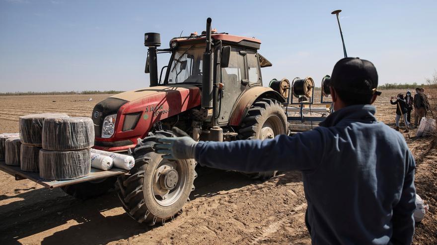 Algodón de Xinjiang: ¿trabajadores forzosos o voluntarios?