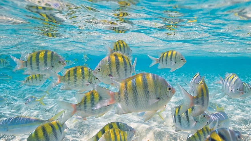 Peces en Punta Cana
