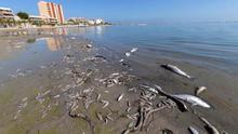 La Comunidad declara a la Región de Murcia en situación de emergencia climática y ambiental