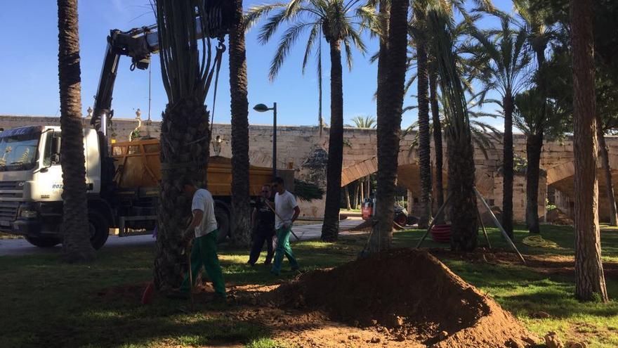 Varios operarios plantando palmers en el cauce del río