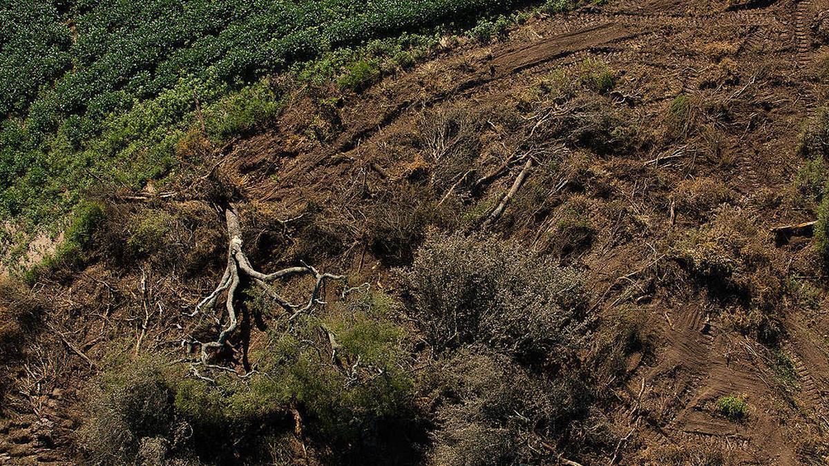 La región del Gran Chaco está al tope de los índices globales de pérdida de bosques nativos. El 85% de un ecosistema único como el quebrachal del Bosque de Tres Quebrachos, en la Provincia de Chaco, ha sido destruido