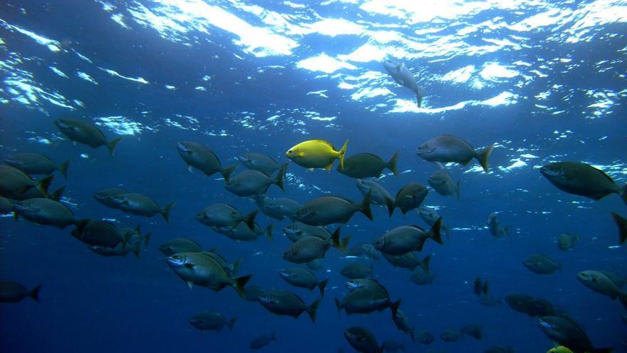 En la imagen, un banco de chopas en la Reserva Marina: Foto: TAMIA BRITO.