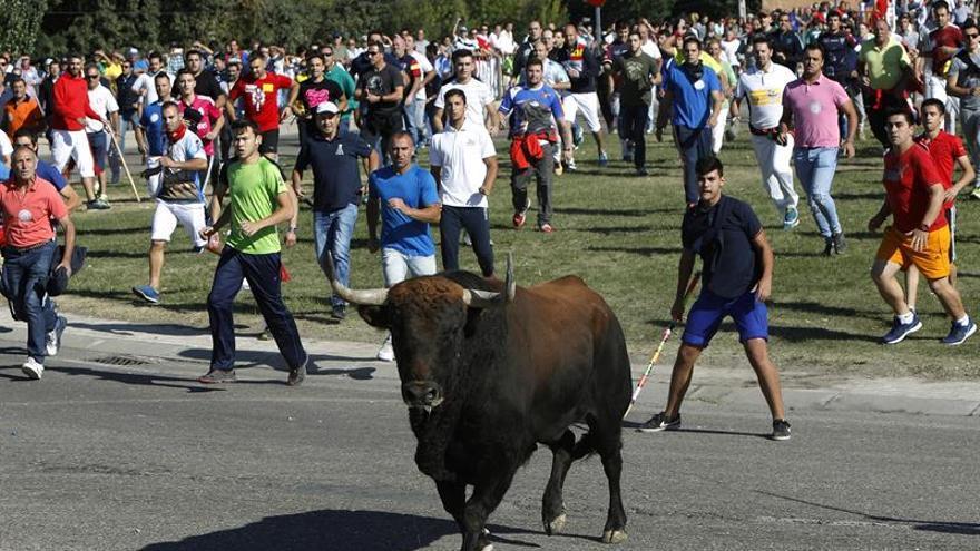 El Toro de la Vega deja un corneado en un festejo sin incidentes de orden público