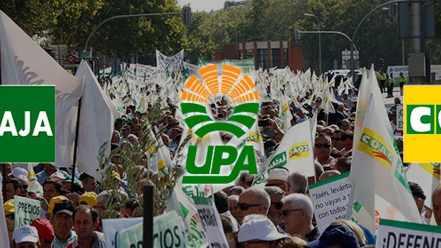 Manifestaciones del campo