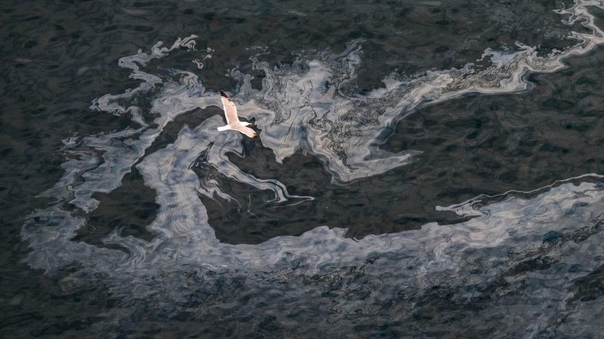Un ave sobrevuela una mancha de fuel del 'Oleg Naydenov'. (GREENPEACE)