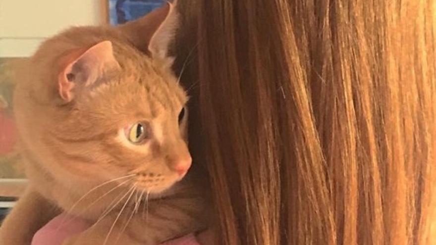 Gato acogido por un caso de violencia de género