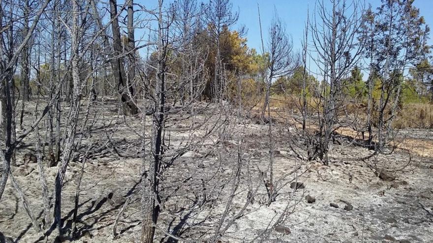 Paraje quemado en el entorno de Enguídanos (Cuenca)