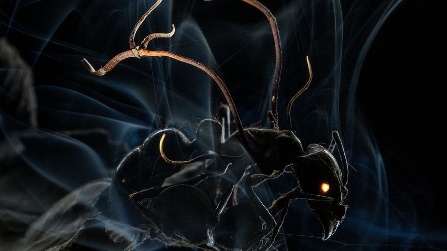 El efecto de los hongos en una hormiga. Anand Varma/World Press Photo