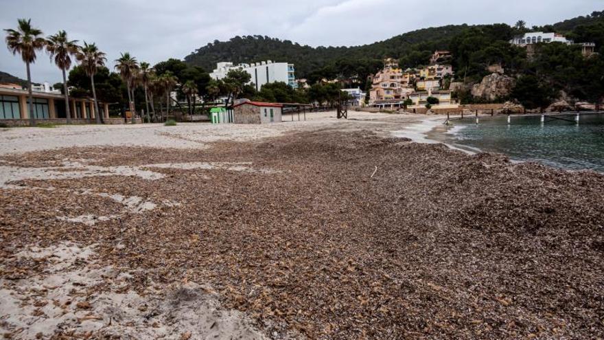 Logran nueva metodología permite monitorizar la floración de algas nocivas