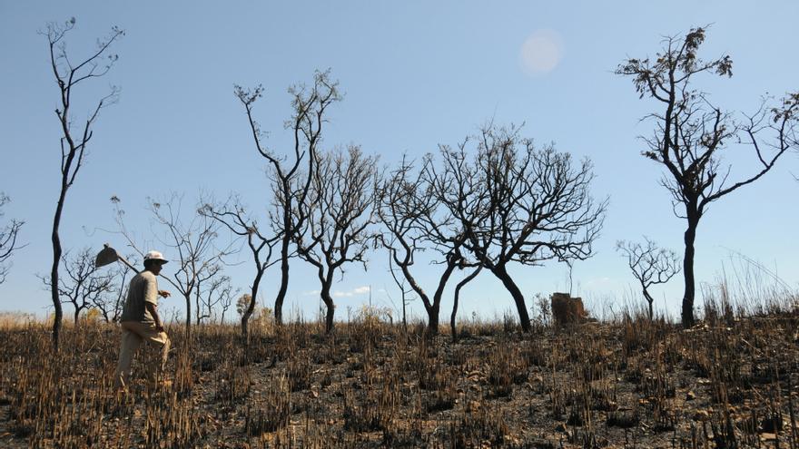 La sequía arruina las cosechas de la región más pobre de Brasil