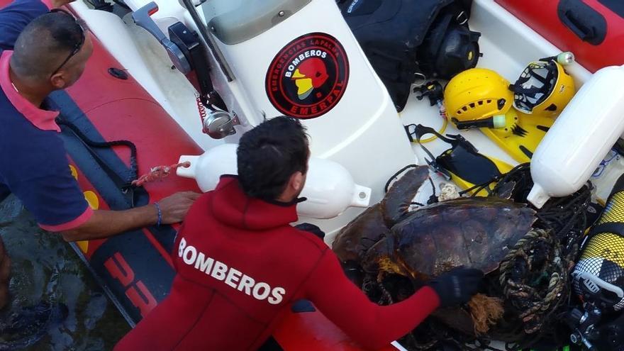 En la imagen, dos bomberos con las tortugas. Foto: BOMBEROS LA PALMA