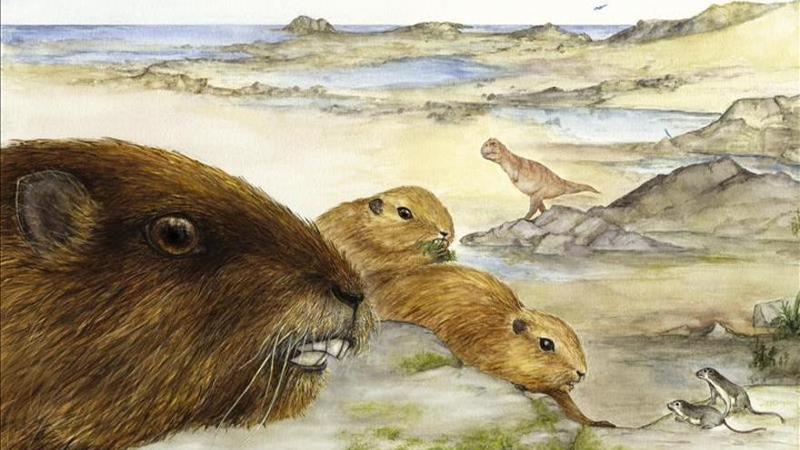 Descubren el cráneo del enigmático mamífero prehistórico Gondwanatheria