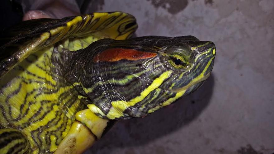 En la imagen, una tortuga.