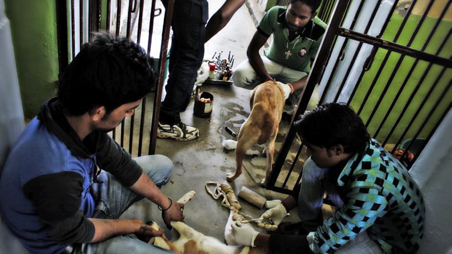 Varios empleados del Tolfa Animal Hospital, uno de los hospitales de animales más importantes de India, atienden a un perro./ Rafa Gassó.