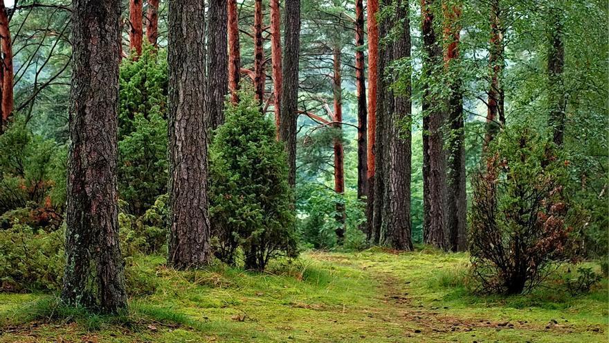 Imagen de un bosque.
